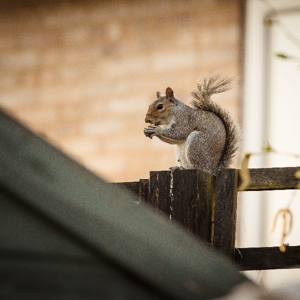 Squirrel Pest Control Services in Medway